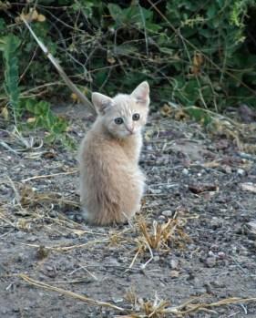 kenya-kittens